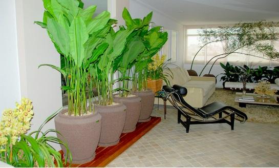 Jardim for Plantas para dentro de casa sombra
